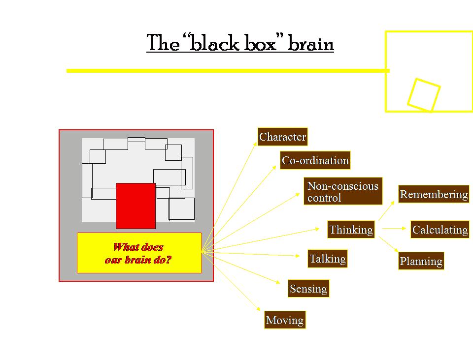 Brain Structure Powerpoint Presentation Template PPT