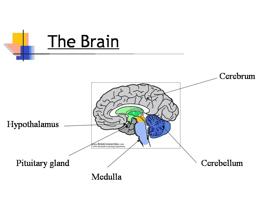General Brain Powerpoint Presentation Template PPT